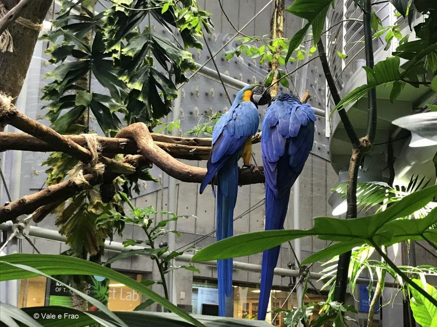 Visitare l' Accademia della Scienza a San Francisco in California pappagalli