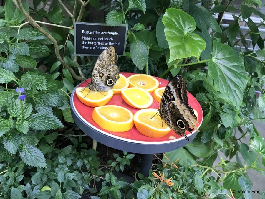 Visitare l' Accademia della Scienza a San Francisco in California farfalle tropicali