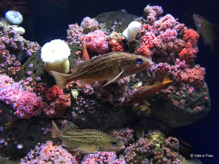 Visitare l' Accademia della Scienza a San Francisco in California acquario