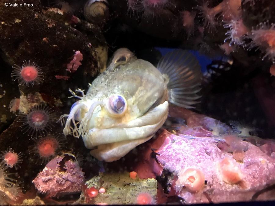 Visitare l' Accademia della Scienza a San Francisco in California pesci buio
