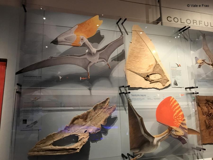 Visitare l' Accademia della Scienza a San Francisco in California animali centinaia di anni fa