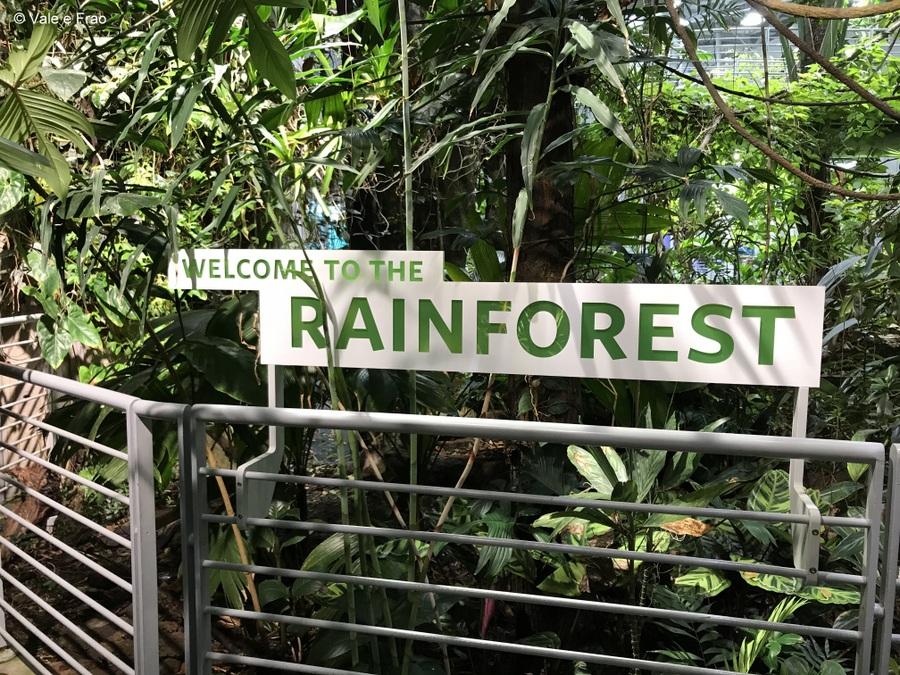 Visitare l' Accademia della Scienza a San Francisco in California rainforest
