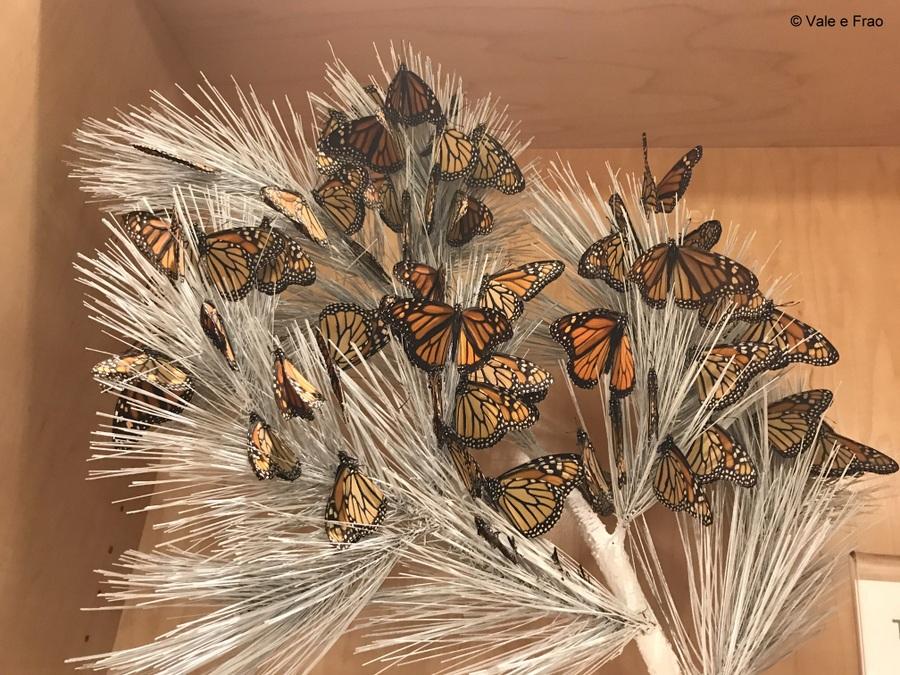 Visitare l' Accademia della Scienza a San Francisco in California farfalle equatoriali